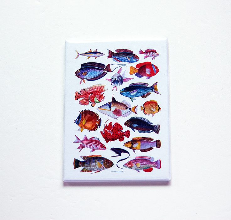 Fish Magnet, Fridge magnet, ACEO, Kitchen Magnet, stocking stuffer, Gift for him, Fathers Day, Fisherman, gift for dad (7449) by KellysMagnets on Etsy