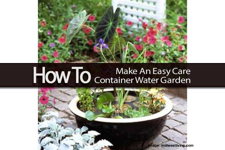 How To Make An Easy Care Container Water Garden