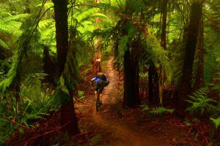 Buxton MTB Park, Buxton (Australia) Photo: ottodavies