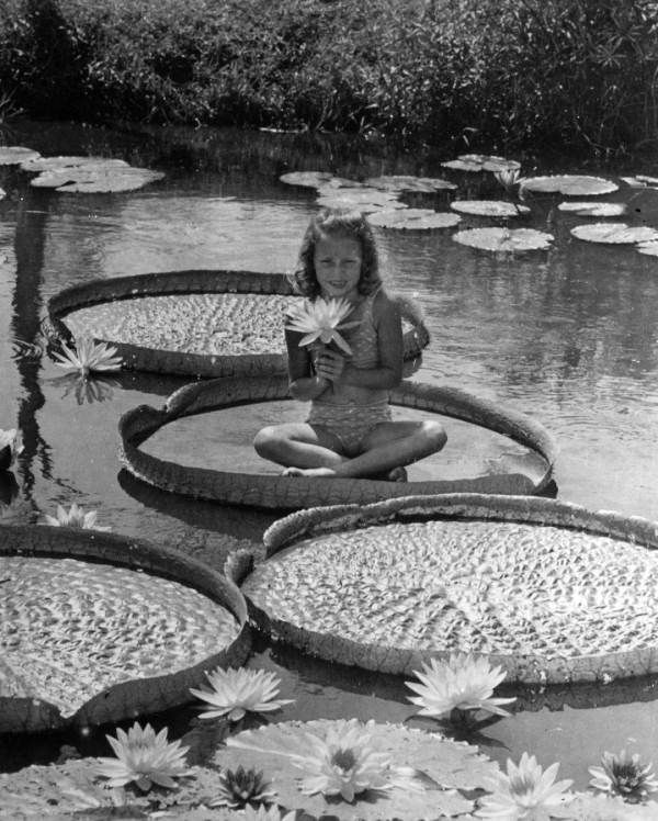 Young girl sitting on a giant lily pad at Slocum Water Gardens - Winter Haven, Florida