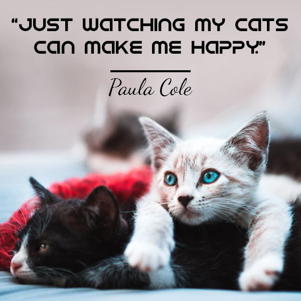 Just Watching My Cats Can Make Me Happy Cat Quotes Cat Love Quotes Cat Love