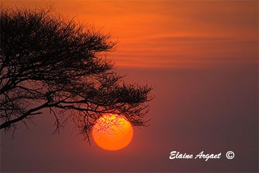 African sunrise taken as we were on our way out of Etosha wildlife park in search of leopards. #EvenEasierDigitalPhotography #photography #sunrise #Africa