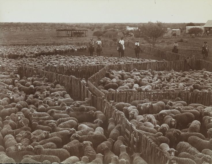 5021B/1/18: Mobs of sheep in pens at Danzy Powell's station, Carnarvon region, ca. 1906.  http://encore.slwa.wa.gov.au/iii/encore/record/C__Rb1927701__S5021BLw%3D%3D1Lw%3D%3D18__Orightresult__U__X3?lang=eng&suite=def