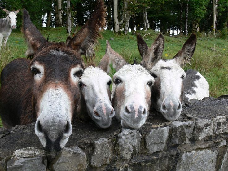 adorable family photo of mules