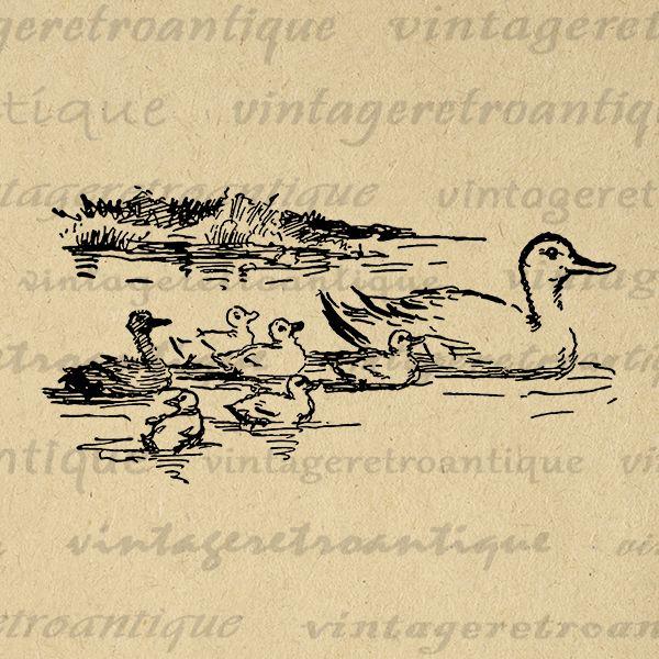 Odd Ducking Image Printable Download Duck Graphic Birds Illustration Digital Vintage Clip Art Jpg Png Eps Print 300dpi No.3830 @ vintageretroantique.com #DigitalArt #Printable #Art #VintageRetroAntique #Digital #Clipart #Download #Vintage #Antique #Image #Illustration