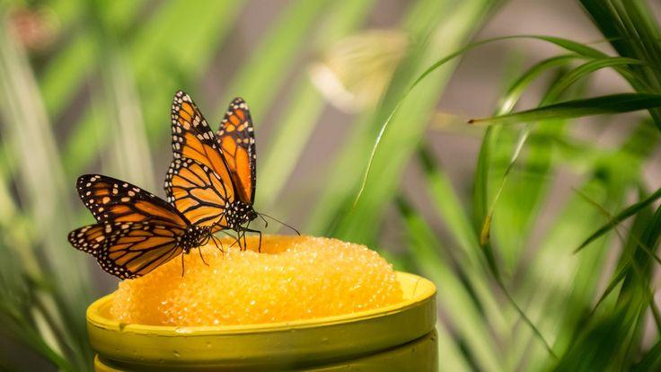 #Allgäu-Urlauber, die die schönste Zeit des Jahres im romantischen #Füssen verbringen, können sich mit der #Schmetterling-#Erlebniswelt #Pfronten auf ein außergewöhnliches #Ausflugsziel freuen, das der ganzen #Familie interessante und vergnügliche Stunden garantiert.  http://www.hotel-fuessen.de/de/blog/die-schmetterling-erlebniswelt-pfronten.html