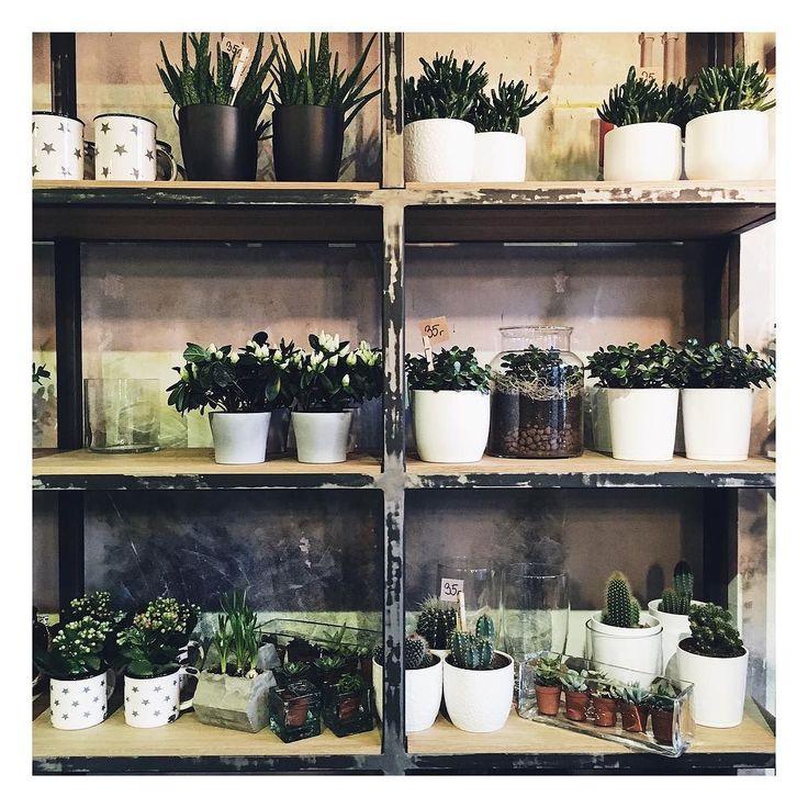 Co za inspirujący dzień spędzony na konferencji Strefa Zmian. WOW _________ #cactus #cactusgallery #cacti #cactilover #green #plants #rosliny #rośliny #kwiaty #kwiatysapiekne #kwiatydoniczkowe #doniczka