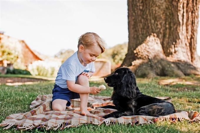 英南東部ノーフォーク州の自宅敷地内で愛犬「ルポ」と遊ぶジョージ王子=7月中旬(英王室提供・ロイター) #イギリス #ジョージ王子