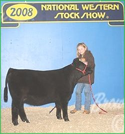 South Side Farm Miniature Cattle - Miniature Lowline NY, MA, VT, CT, NJ, PA, Miniature Lowline Cattle NY, MA, VT, CT, NJ, PA, Miniature Lowline Cows NY, MA, VT, CT, NJ, PA, Miniature Lowline Angus NY, MA, VT, CT, NJ, PA, Miniature Angus NY, MA, VT, CT, NJ, PA, Miniature Lowline breeder NY, MA, VT, CT, NJ, PA, Miniature Lowline Bulls, Miniature Lowline Cattle Breeder NY, MA, VT, CT, NJ, PA, Miniature Lowline Breeders NY, MA, VT, CT, NJ, PA, South Side Farm Miniature Cattle - Lowline NY, MA…