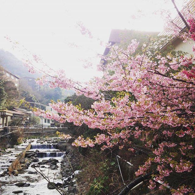 会社の仲間達と一泊箱根旅行に行ってきました♪  午後からセミナーなので、蒲鉾買って先に帰宅ですが、ゆっくり温泉入れたし、夜中まで楽しいひと時を過ごせたので午後も頑張ります!  #明日からも旅行です