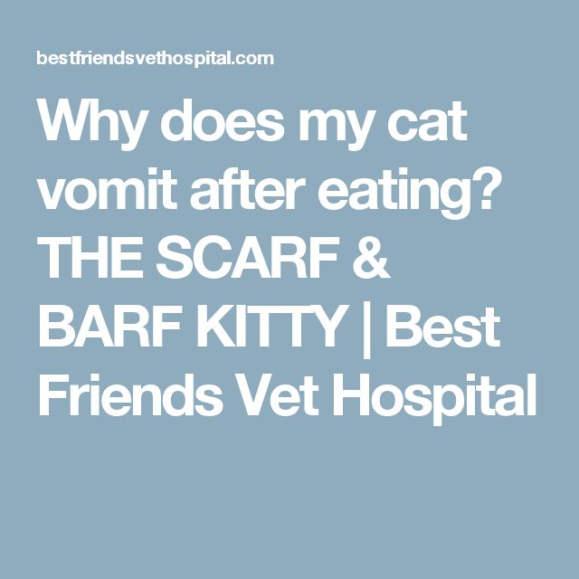 Why does my cat vomit after eating? THE SCARF & BARF KITTY   Best Friends Vet Hospital