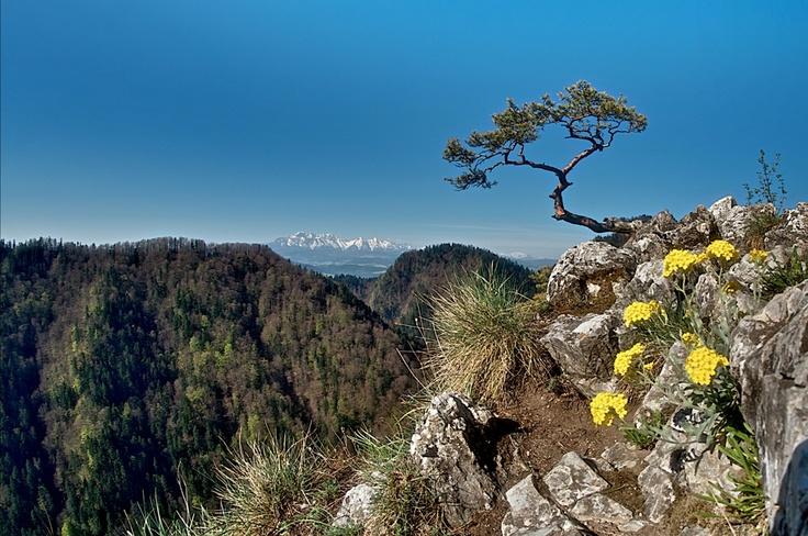 Pieniny Lesnica - Slovakia
