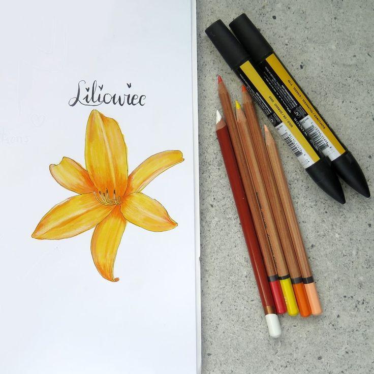 """Polubienia: 98, komentarze: 7 – Paulina Weiher @theCieniu (@paulinaweiher) na Instagramie: """"Wyzwanie #project_plant u @atogrzywa - liliowiec. Ale mi się miło ten kwiat rysowało! I jestem…"""""""