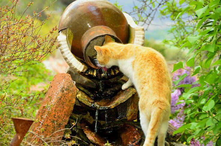 Gato bebiendo agua en Patones de Arriba - Con la cámara en la mano