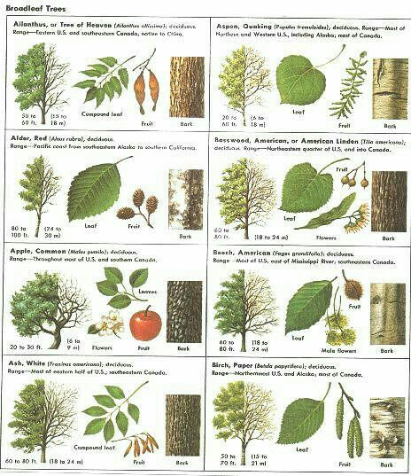 Identify trees - make cards, board games and books