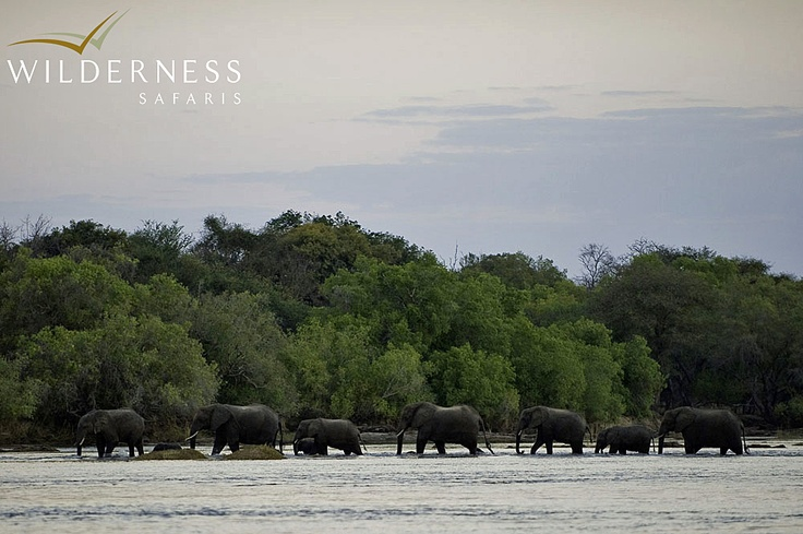 Toka Leya Camp - The presence of several protected areas in the vicinity, from the Zambezi National Park in Zimbabwe to the Mosi-oa-Tunya Zoological Park in Zambia, means that herds of big game such as elephant and buffalo, as well as smaller species and even predators such as lion persist in the area. #Safari #Africa #Zambia #WildernessSafaris