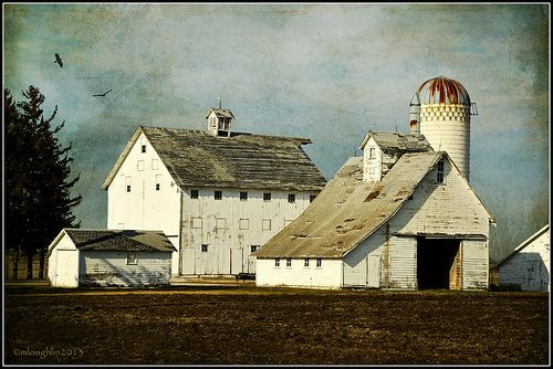 It's unusual to see all white farm buildings in Iowa, but these were too good to pass up!  Love the windows high up on the barn, and it's a great silo. Nice on black if you have the time. Texture by Distressed Jewell.