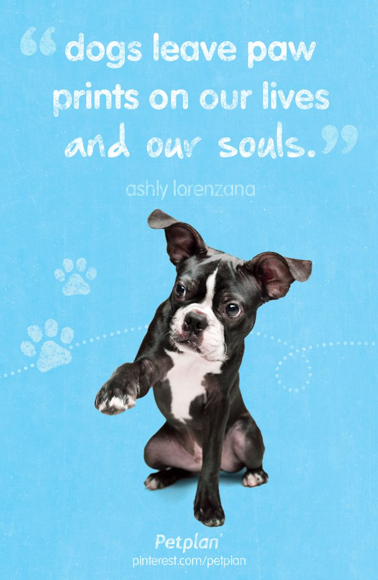 """""""Dogs leave paw prints on our lives and our souls"""