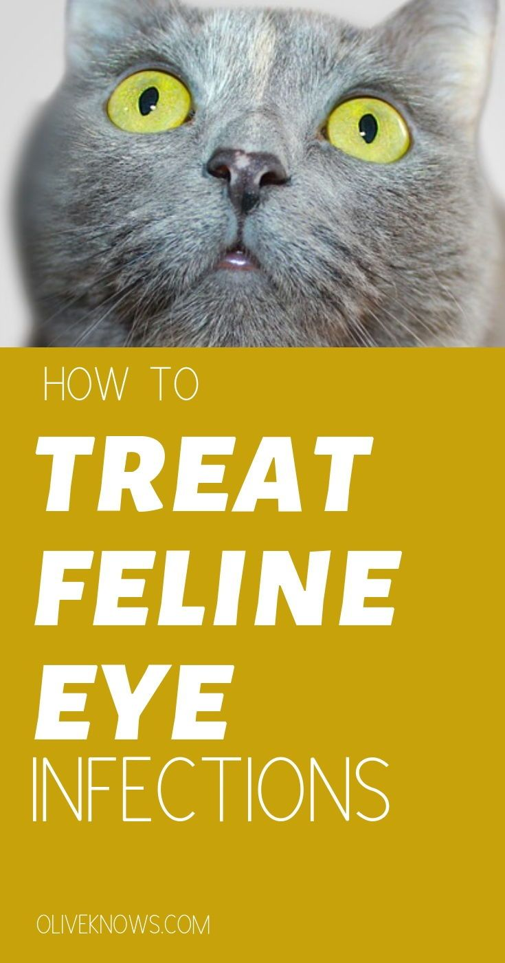 How To Treat Feline Eye Infections With Images Cat Care Cat Medication Cat Parenting
