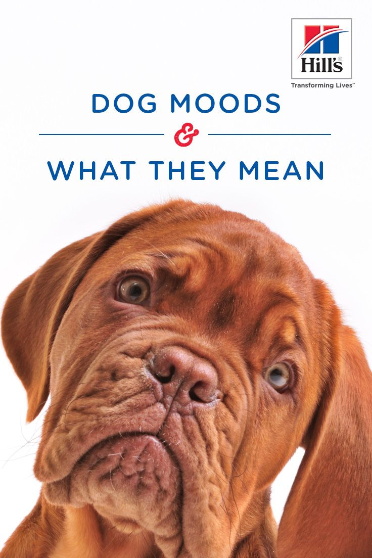 12 Dog Behaviors What They Mean Dog Behavior Dog Care Dogs