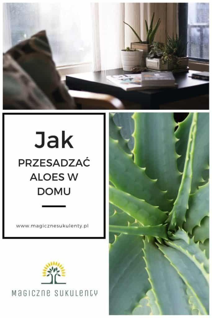 Jak Przesadzac Aloes W Domu Aloe Monstera Plants