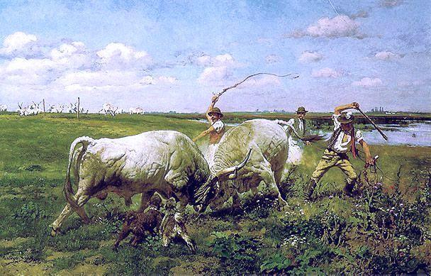 Verekedő bikák, Hungarian bull