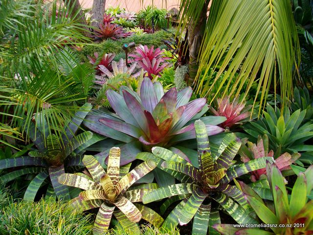 Tropical Garden Ideas Nz 60 best tropical gardens images on pinterest | tropical plants