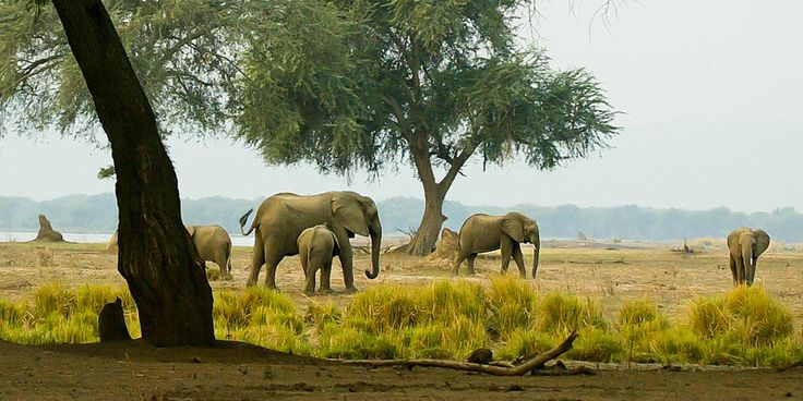 Elefanten | http://www.wwf.de/themen-projekte/bedrohte-tier-und-pflanzenarten/elefanten/die-grauen-riesen/