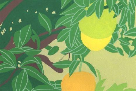 季節の植物。2018/1/29橙の木。
