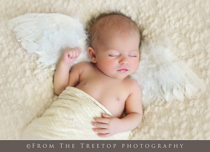Angel Wings newborn picture.  Photo by From the Treetop Photography
