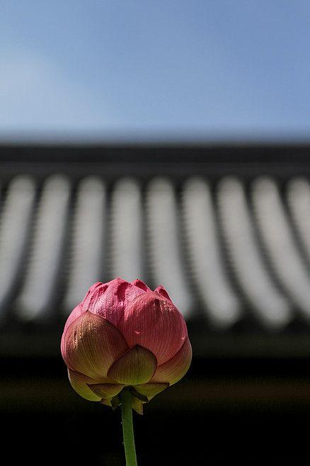 呼読-桜-笠寺/名古屋旧街道区/成道寺 #呼続 #桜 #笠寺 #街道 #名古屋 #神社 #寺 #歴史 #東海道 #鎌倉街道 #日本 #japan #tourist #spots #nagoya #aichi #路地 #旧街道区 #花 #パワースポット #成道寺 #城跡 #alley #temple #tree #zen #flower #lotus #蓮 #garden #庭 #SamuraiRoad #Japantrip #trip #whattodoinnagoya #visitashrine #thingstodoinjapan #todoin #to #do #in #visit #special #view