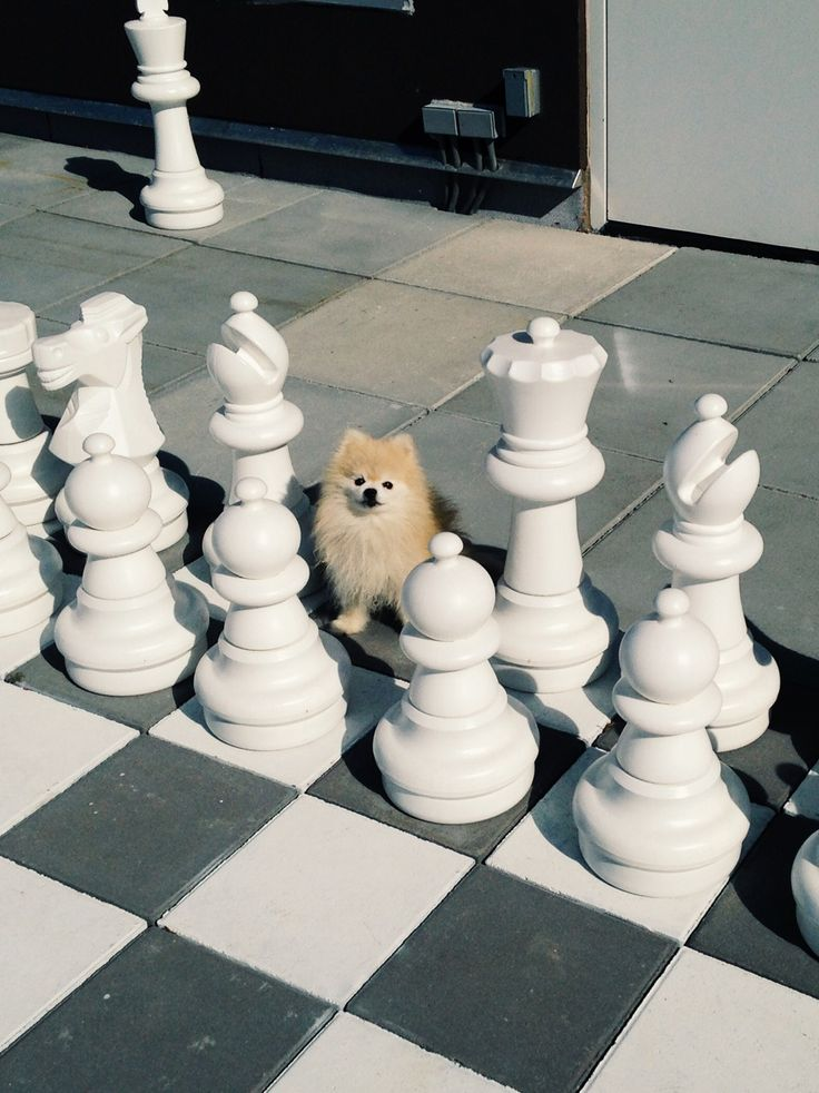 Cutest chess piece I've ever seen