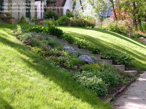 best 25 sloped garden ideas on pinterest sloped yard sloping garden and landscaping a hill. Black Bedroom Furniture Sets. Home Design Ideas