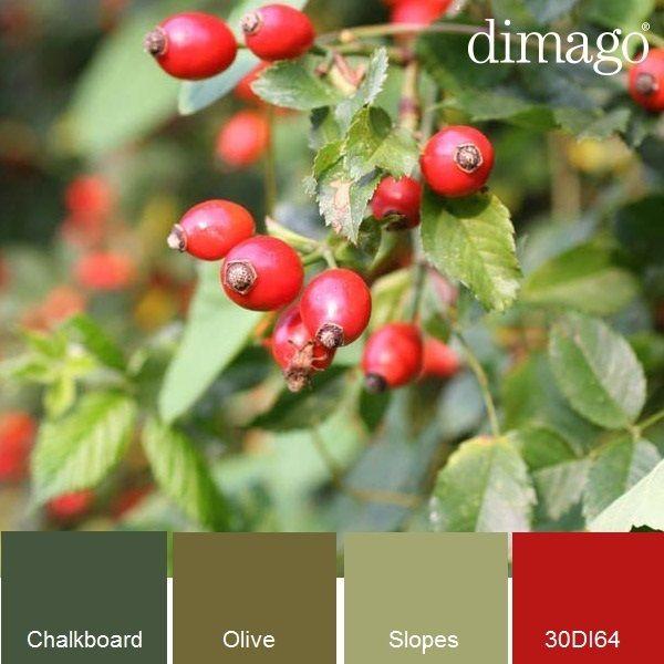 #Herfstkleur, rode en oranje tinten van bessen en rozenbottels steken prachtig af tegen de verschilende kleuren groen. #dimago #verfkleuren
