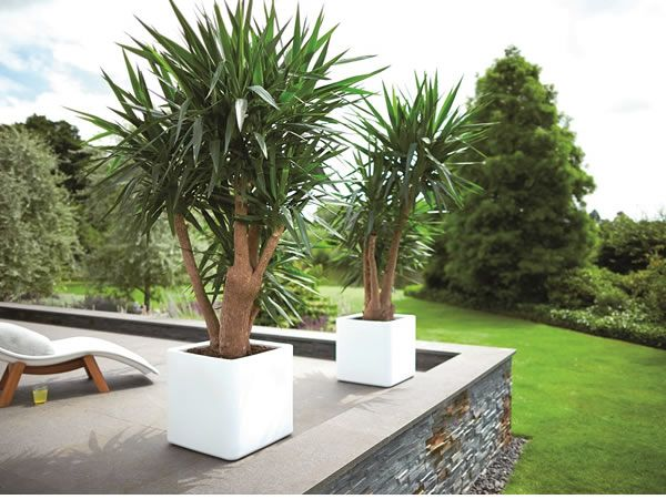The Robustness Of Large White Pure Square Planter Creates A Contemporary Look And Outdoor Plantsoutdoor Gardenssquare Planterscreate