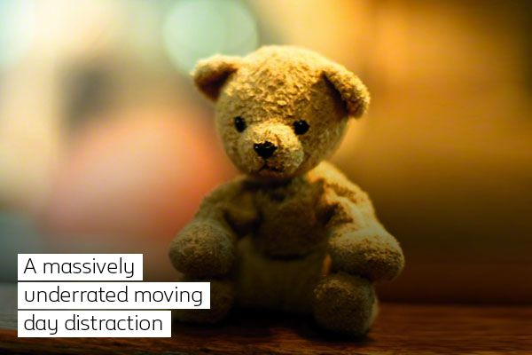 """Image of bear with text saying """"A massively underrated moving day distraction"""""""