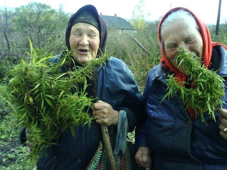 Medicinsk Cannabis - Oplysning Til Det Danske Folk