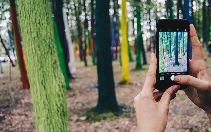 O pădure în culori