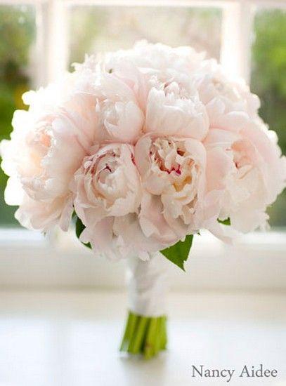 Blooming Gallery - Bouquet of Peonies