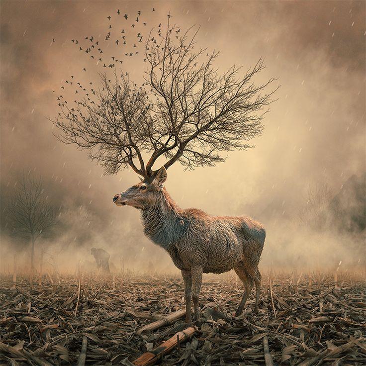 Impressive Photo Manipulations by Caras Ionut