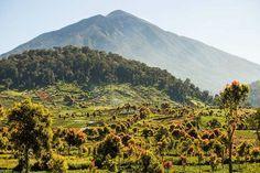 Parque Nacional Kerinci Seblat, Sumatra.