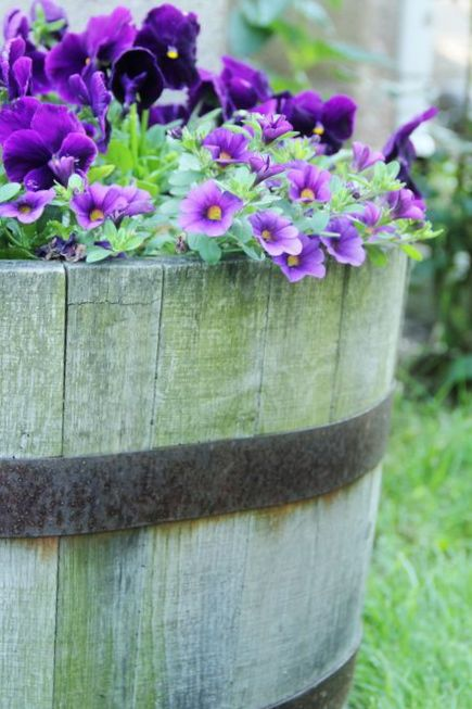 Great early-spring container garden: Purple pansies and calibrachoa