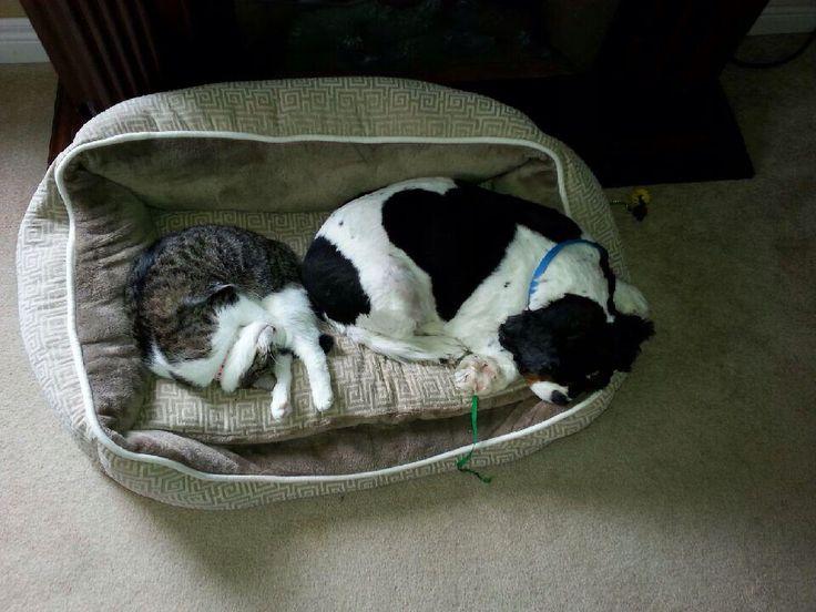 Awe they cuddle