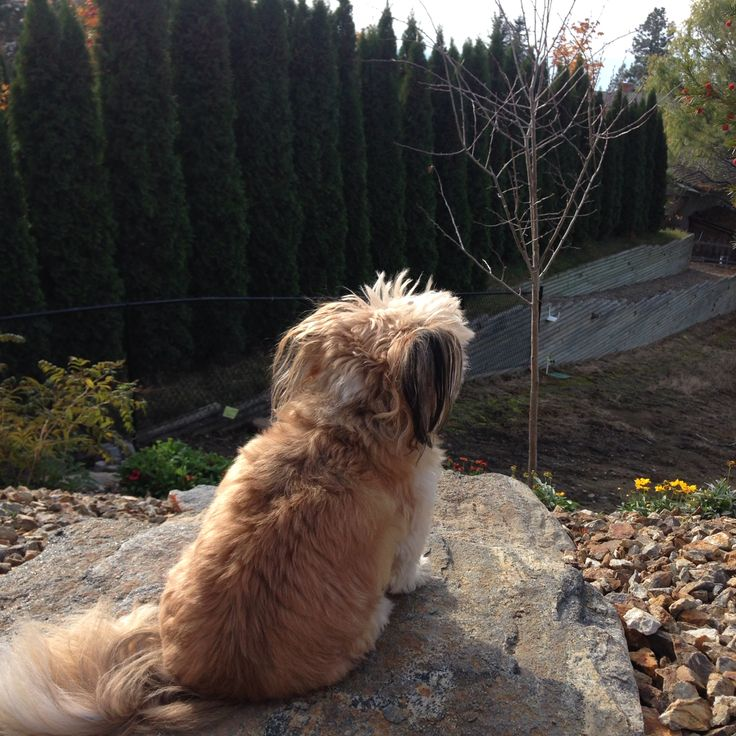 Watching over the yard