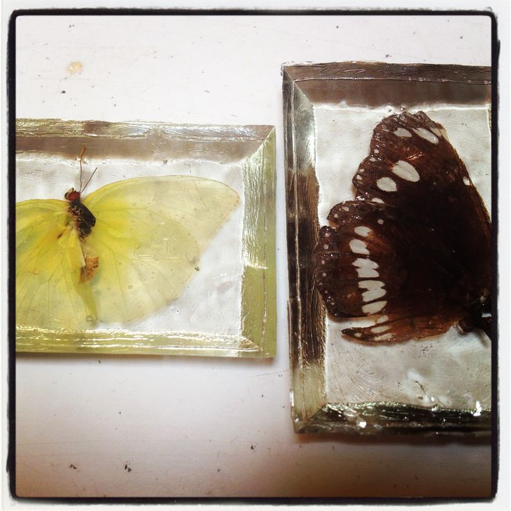Butterflies pretty in resin