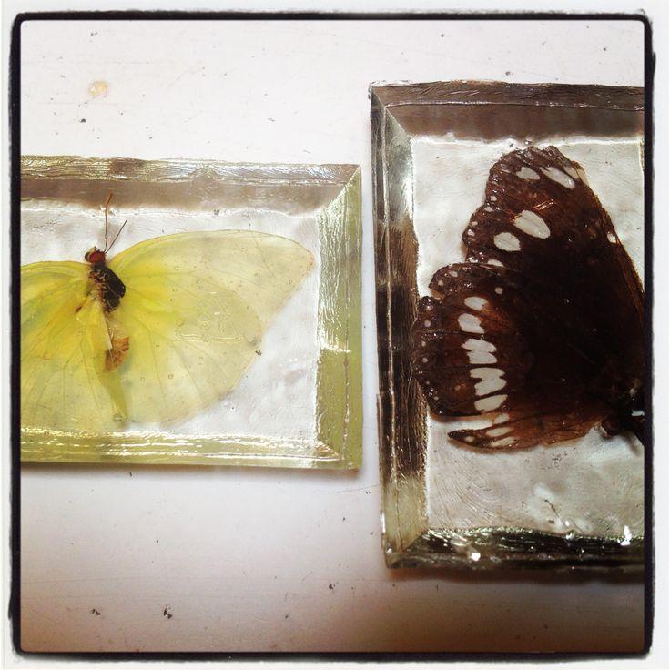 Butterflies pretty in resin