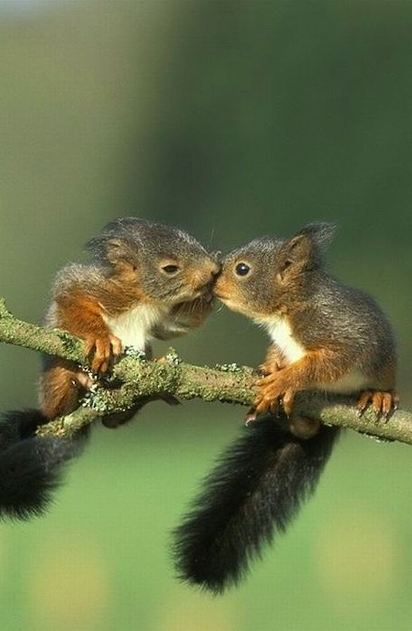 Squirrel nuzzle • photo: Rohtola on Flickr