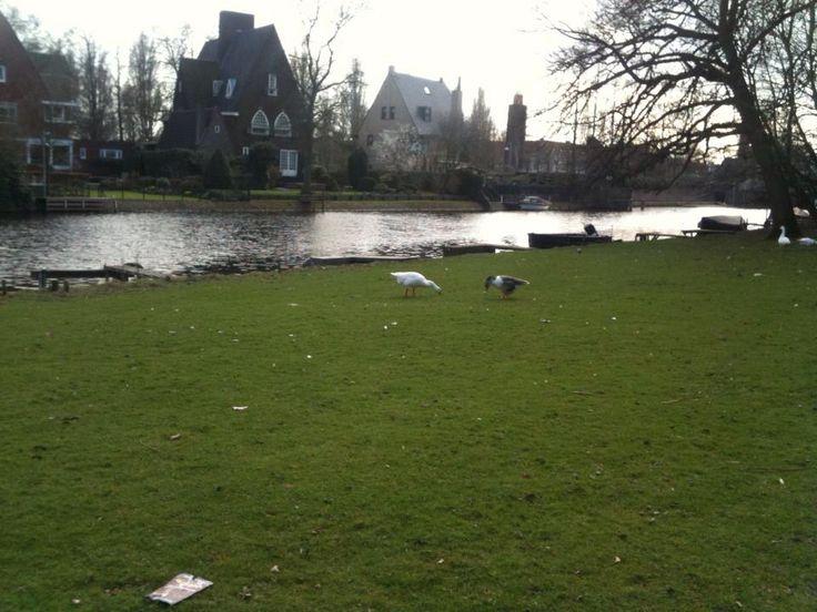 Bucolic Amsterdam.