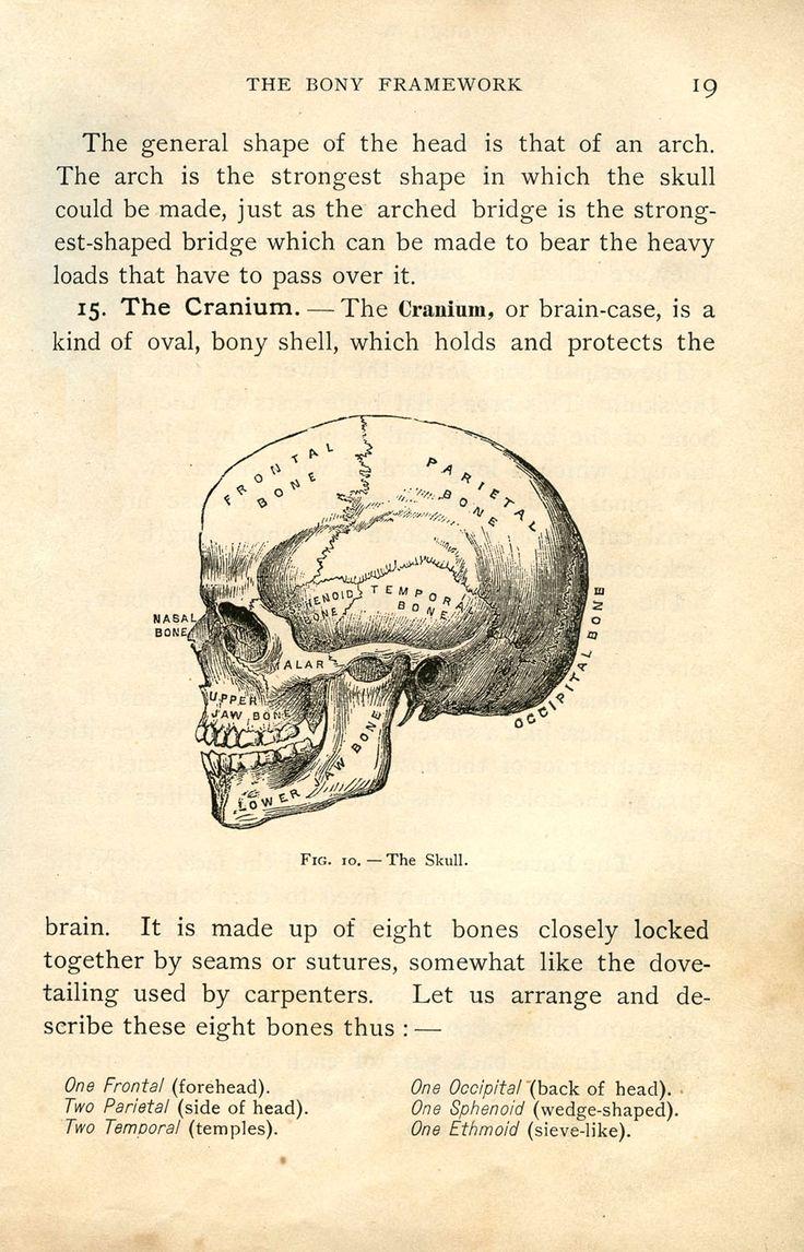 best 25 skull anatomy ideas on pinterest anatomy