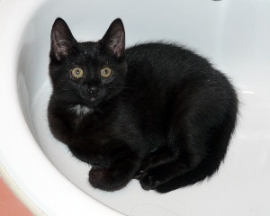 Meet 4 mth old Ponoka!  She is the smallest of 3 kittens found living in a shed.  She loves human company now and sitting on laps.  She would love to be adopted into a home with her sister Sedalia. www.orphankittenrescue.com